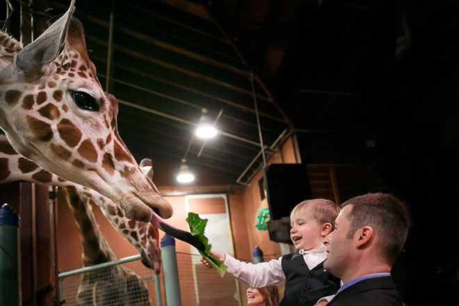 Guests have a chance to feed the giraffes at the San Francisco Zoo wedding