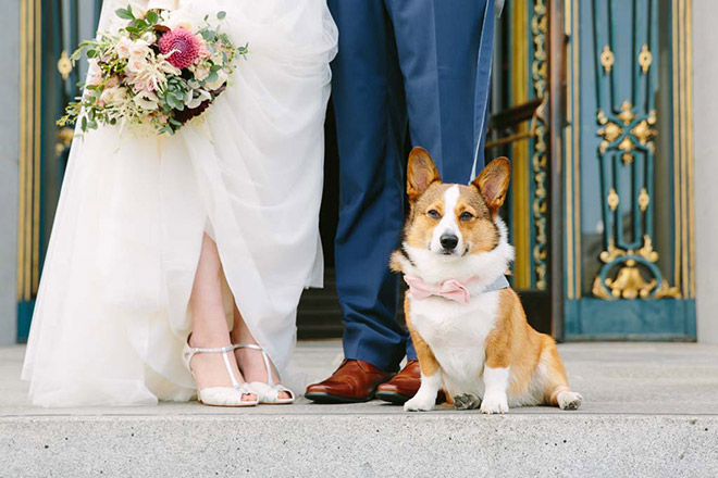 San Francisco wedding photographer, dog at City Hall wedding